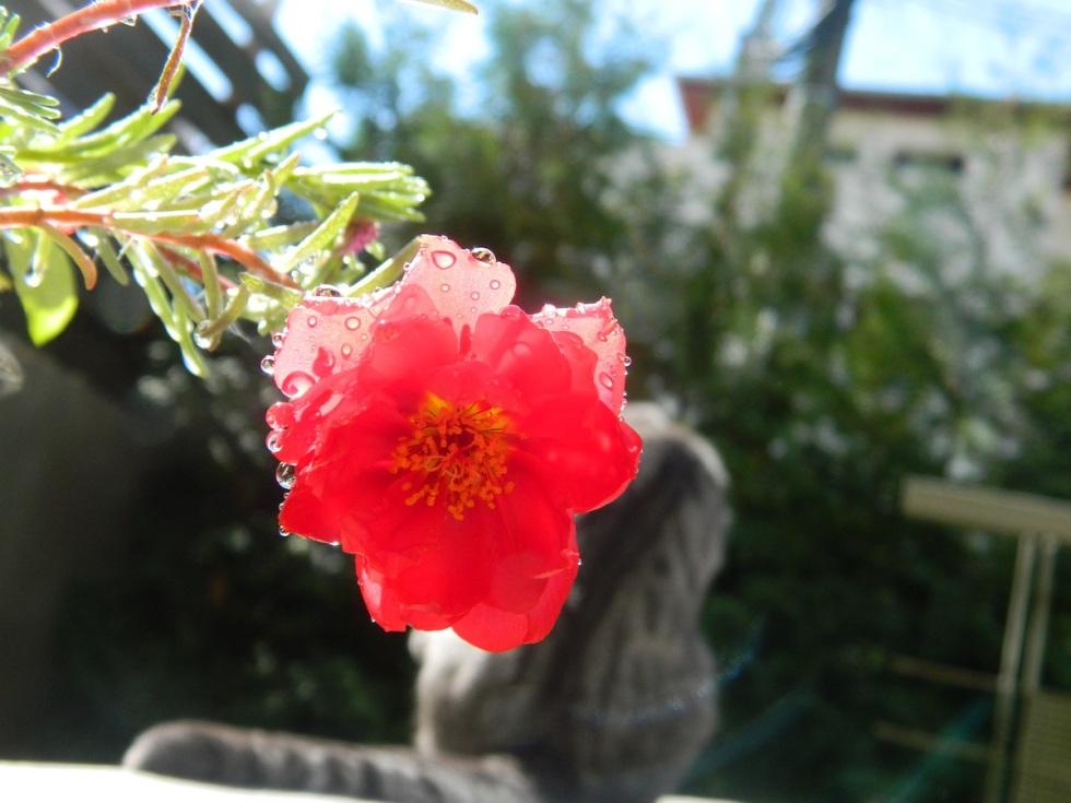 redflowerandnoodles