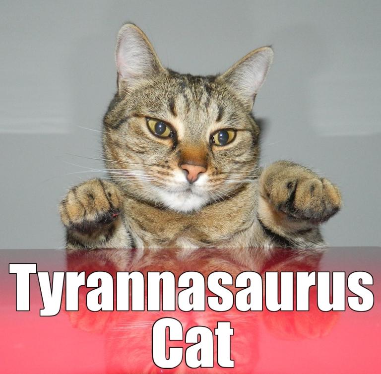 tyrannusaruscat