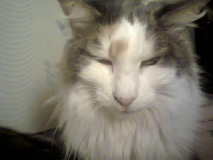 Luce the Cat