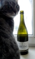 my cat Noodles and a bottle of Moldovan wine