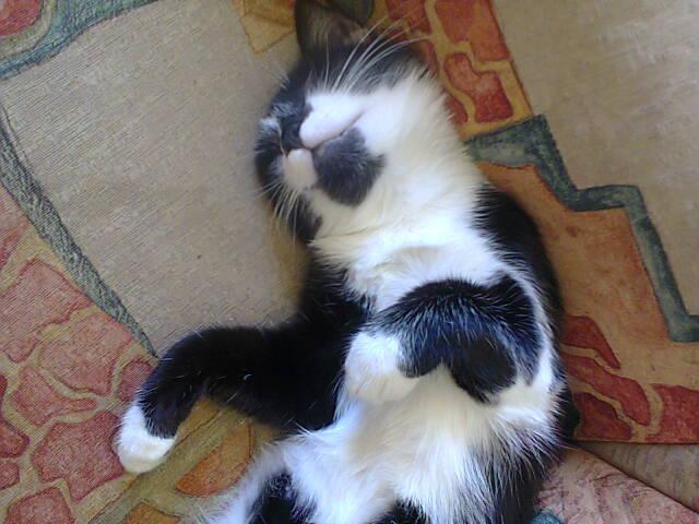 Sleepyratty